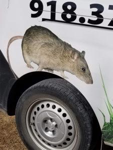 Bed Bug Exterminator Tulsa