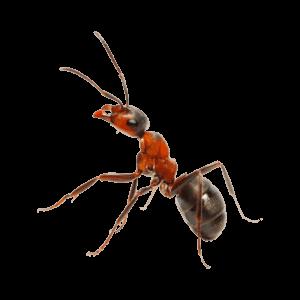 Claremore Pest Control